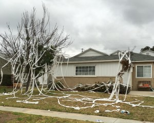 "At my high school, the boys we rejected sought revenge by ""rolling"" our house in toilet paper."