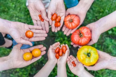 Hands of five people holding various sorts of tomatoes