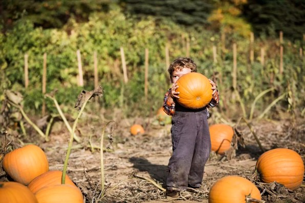 Boy carrying pumpkin while standing on field