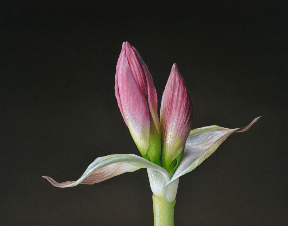 "Trish Coonrod ""Amaryllis"" 11x14 oil on aluminum composite material $1,600. SOLD"