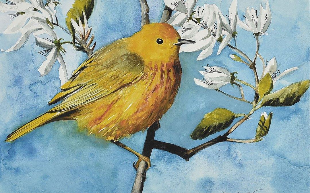"Jennifer Fais ""Spring Wedding: Yellow Warbler in Juneberry"" 7x10 watercolor/acrylic $340."