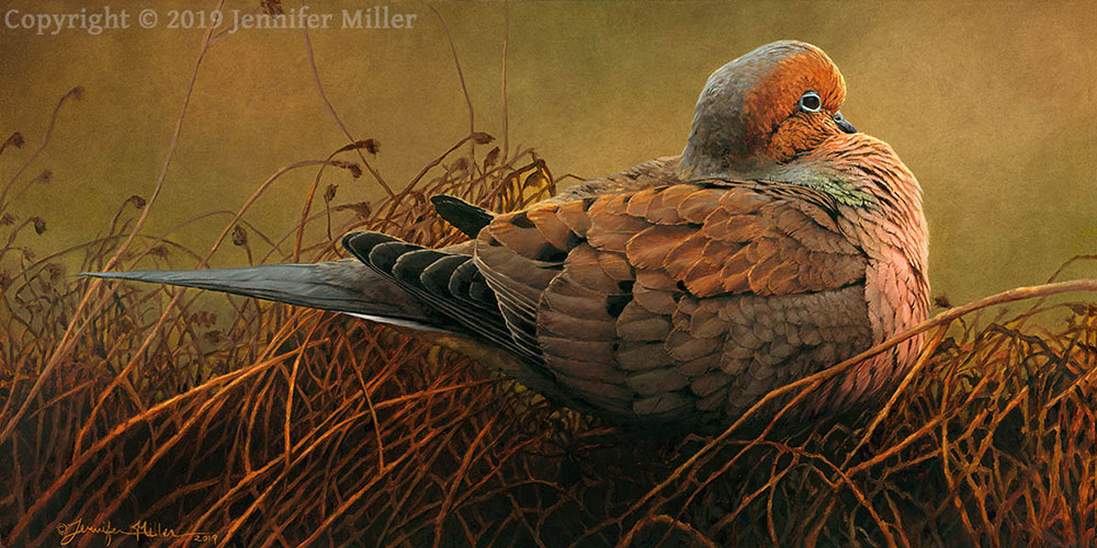 "Jennifer Miller ""A Moment of Peace - Mourning Dove"" 12x24 oil $2,800. SOLD"