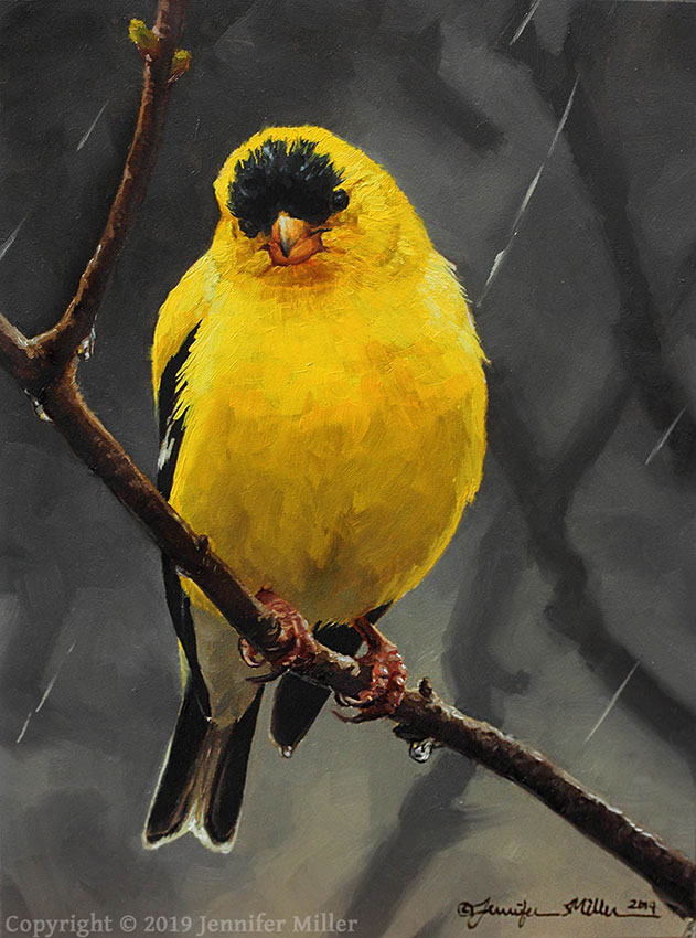 "Jennifer Miller ""April Showers - American Goldfinch"" 7x5 oil $375. SOLD"