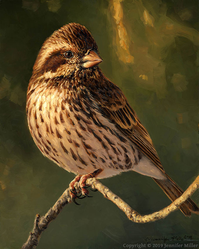 "Jennifer Miller ""Female Purple Finch"" 10x8 oil $850. SOLD"