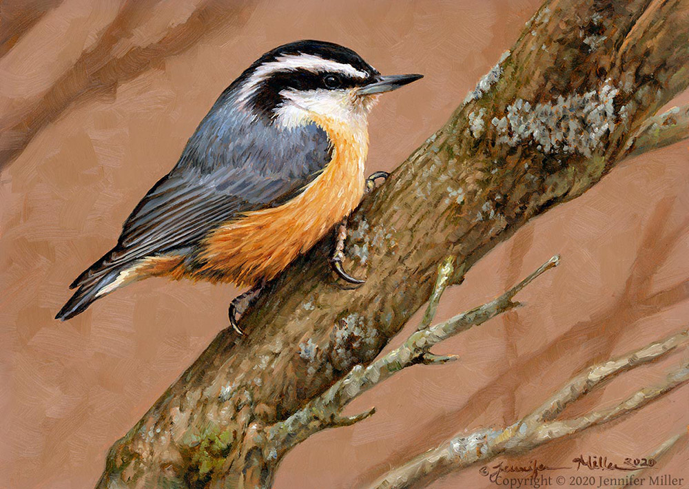"Jennifer Miller ""Diagonally"" (Red-Breasted Nuthatch) 5x7 oil $375. SOLD"