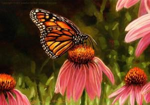 "Jennifer Miller ""Monarch on Coneflower"" 5x7 oil $375. SOLD"