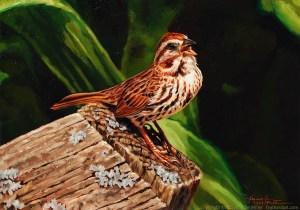 "Jennifer Miller ""Singing on the Old Garden Gate"" (Song Sparrow) 5x7 oil $375. SOLD"