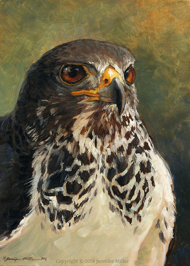 "Jennifer Miller ""Swainsons Hawk"" 7x5 oil $350."