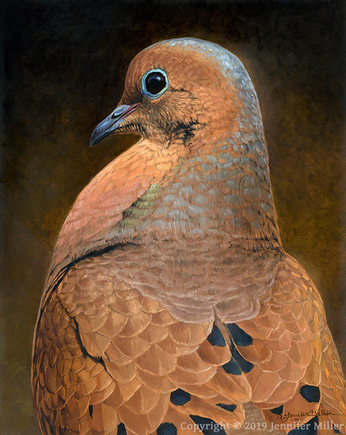"Jennifer Miller ""That Look - Mourning Dove"" 10x8 oil $850."