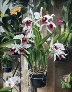 "Valorie Rohver ""The Orchid Room"" 14x11 oil $750."