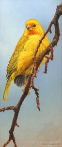 "Jennifer Miller ""Saffron Cascade"" 14x6 oil $900. Inquire"