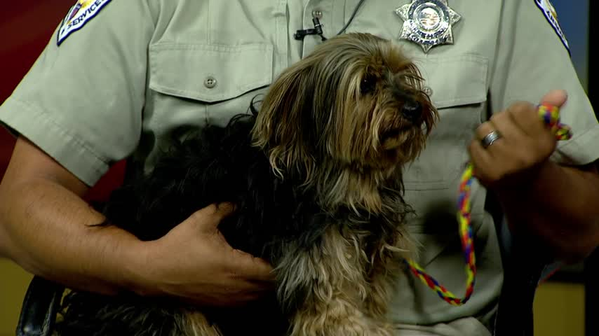 Pet of the Week - Sparky_43531597