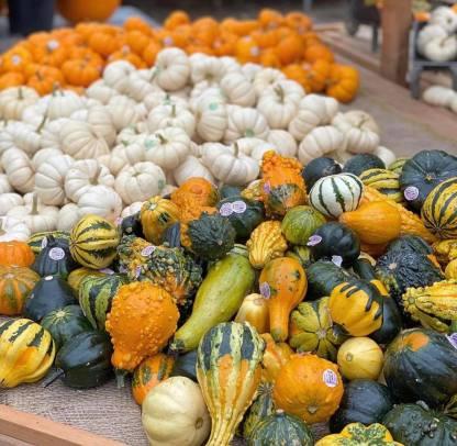 TAW Fancy Pumpkins
