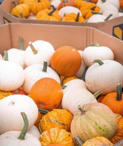 TAW Pumpkins