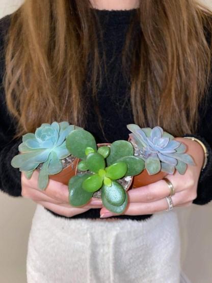 TAW-Succulent