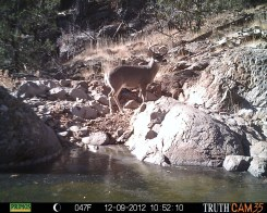 Trail-camera Pictures