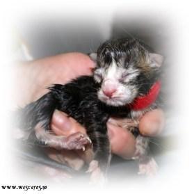 A2 newborn