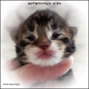 Alaric 7 days old