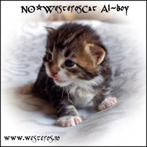 Alaric 3 weeks old