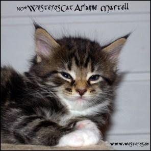 Arianne 5 weeks
