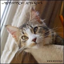 Arya 9 months old