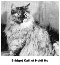 Bridget Katt MCO fs (skilpadde smoke) født 6 april 1969 i Florida, Topp 2.