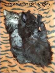 brothers 4 weeks old
