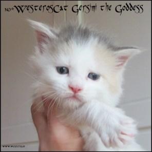Gersimi 4 weeks old