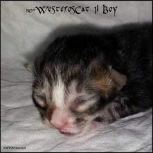 I1 boy newborn