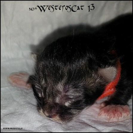 I3 newborn