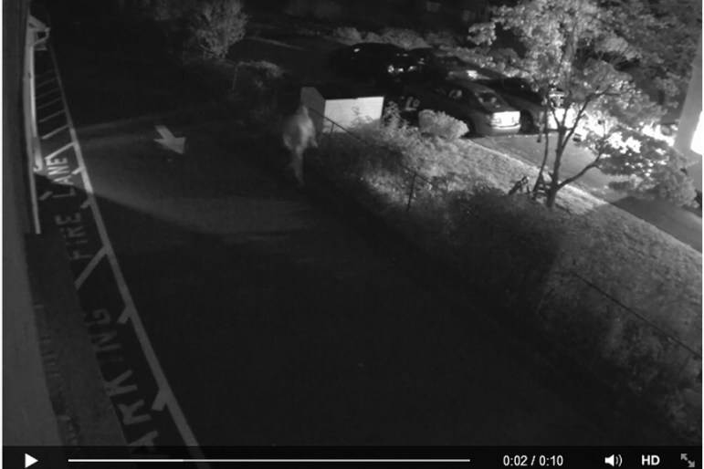 An alleged home break in on Pleasant Street in October 2014 (credit: Westford Police Department)