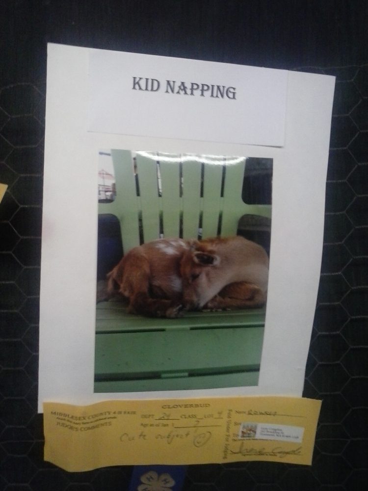 Kid Napping by Rowan of Townsend  (courtesy - Holly Pritchard)