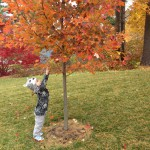 Emily-King-Reaching-for-the-Fall-leaves-Oct-2015-150x150