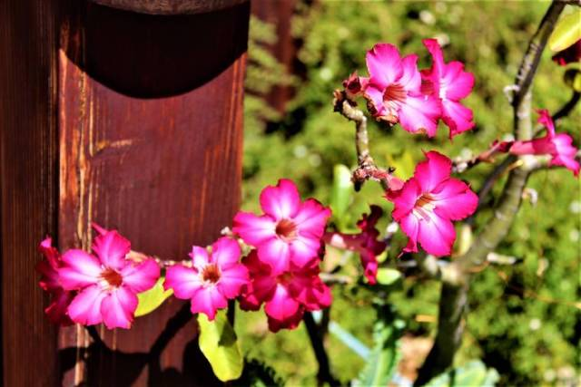 Island Life: Blooming bright