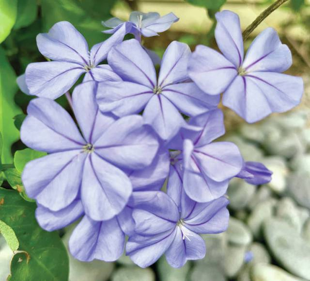 Island Life: Purple smiles