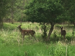 Traffic jam on the Humber Trail