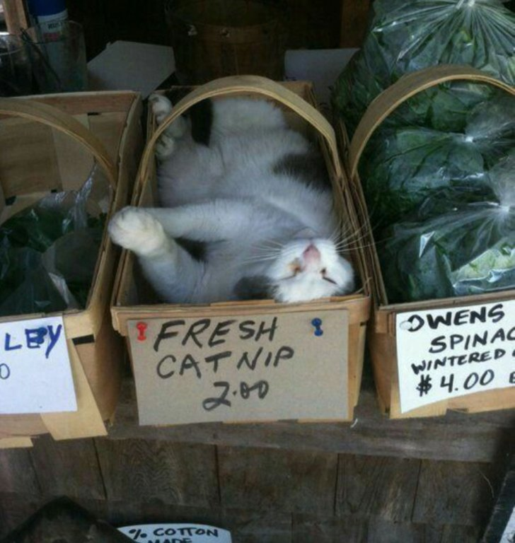 A cat at a farmers market reclining in a basket of catnip.