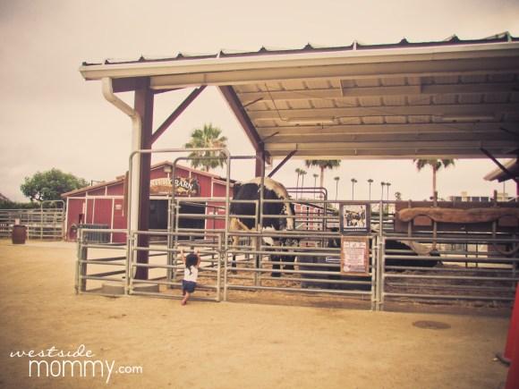 Bull at Centennial Farm
