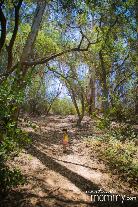 FranklinCanyon_hike_trees_photoop