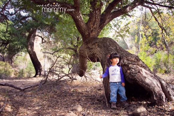 SolsticeCanyon_WSM_tree02_aria