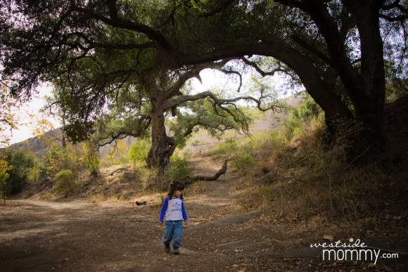 aria_walking