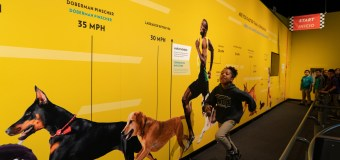 "Check out ""Dogs! A Science Tail"" Exhibit before it leaves the California Science Center"