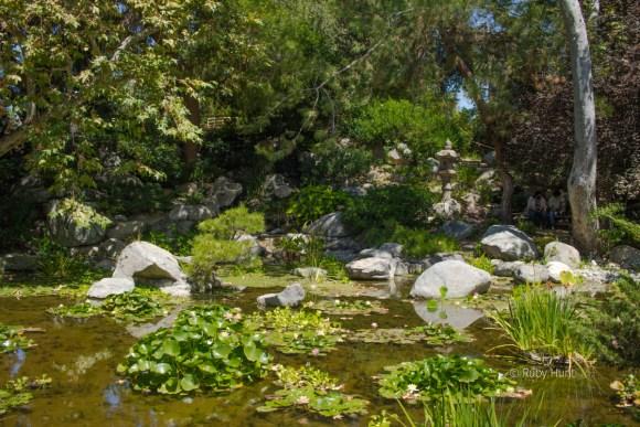 Storrier Sterns Japanese Garden in Pasadena. Image of pond.