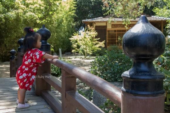Toddler on the bridge at Storrier Sterns Japanese Garden in Pasadena.