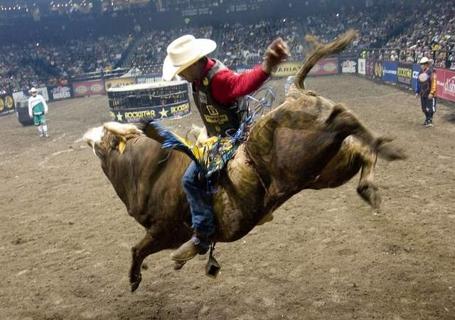 Image result for bull rider images
