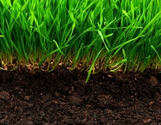 thatch and scalping - a healthy lawn sample