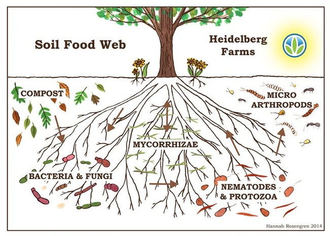 Fertile soil and the soil food web