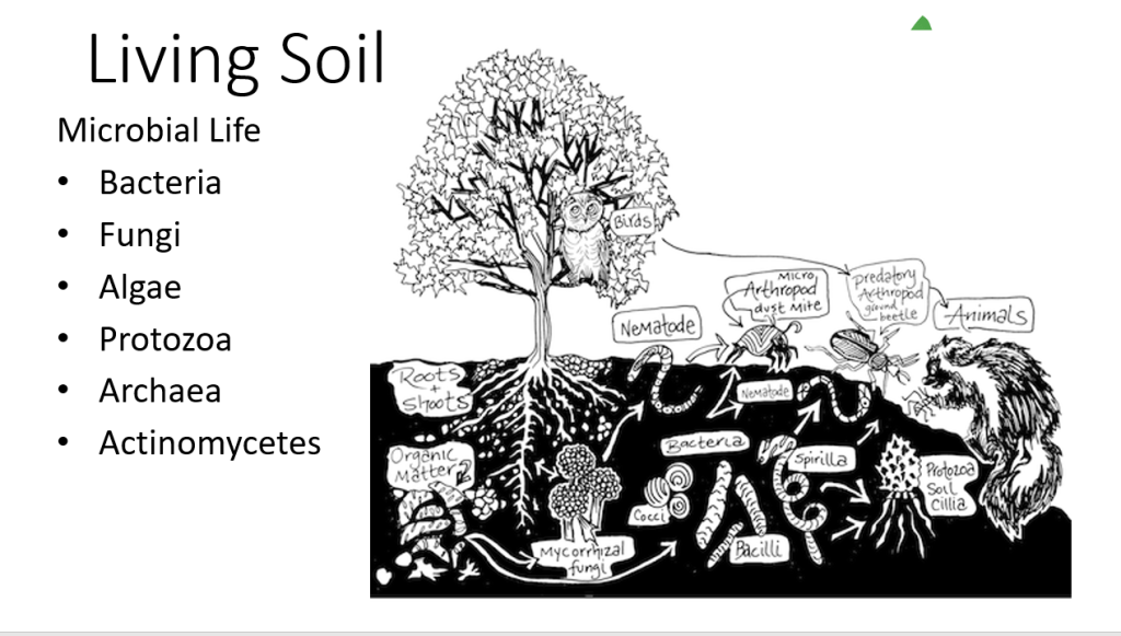 Building Healthy Soil Living Soil Microscopic Life