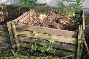 To pull or not to pull - compost bin