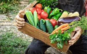 Community Supported Agriculture - fresh veggies